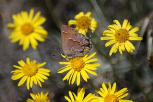 Jefferson County Oregon Wild Flowers and Small Butterfly 465