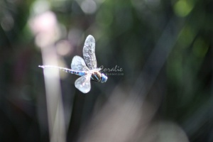 Dragonfly in Flight 307