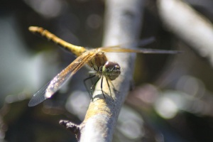 The Dragonfly 074