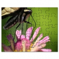 colorful yellow swallowtail butterfly puzzle2
