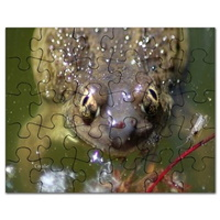 spadefoot toad puzzle