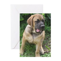 english mastiff puppy greeting cards