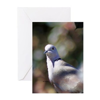 portrait of a dove greeting cards
