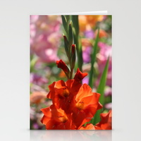colorful-orange-glad-flowers-cards