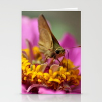colorful-skipper-butterfly-cards