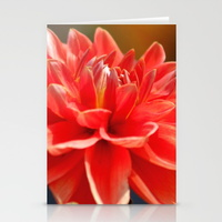 portrait-of-a-dahlia-bloom-cards
