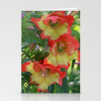 yellow-orange-glad-flowers-cards