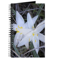 White Sand Lily Flower Journal