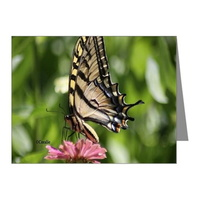 colorful yellow swallowtail butterfly note cards