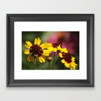 colorful-daisy-flowers-framed-prints