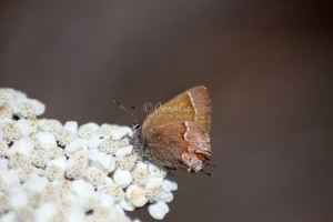 Small Butterfly 223