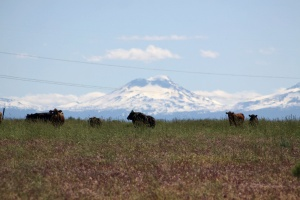 Sisters Mountains Seen in Jefferson County Oregon Cattle Views 1109