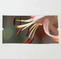 Micro of a Lily Flower in Bloom Beach Towel