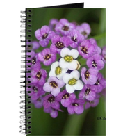 alyssum small  flower bloom 142 journal