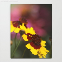 Colorful Daisy Flowers Notebook2
