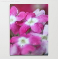 Pink White Verbena Flowers Notebook2
