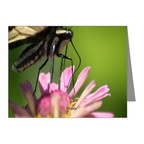 colorful yellow swallowtail butterfly note cards2