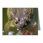 spadefoot toad note cards