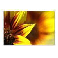 color of the sunflower postcards package of 8