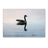 goose in the early morning light postcards packag