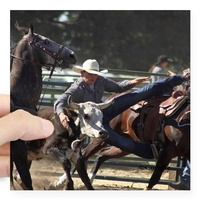 bulldogging steer wrestling rodeo action sticker