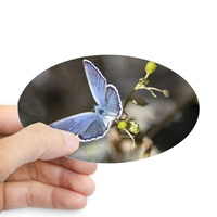 karner blue butterfly sticker oval