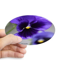pansy flower bloom sticker