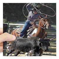 rodeo roping sticker