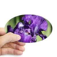 purple white bearded iris flower sticker