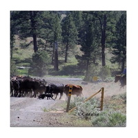 cattle drive tile coaster