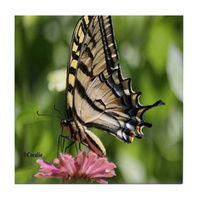colorful yellow swallowtail butterfly tile coaster