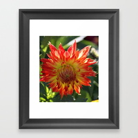 fire-in-the-sky-dahlia-flower-096-framed-prints