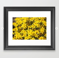 High Desert Wildflowers Framed Art Print