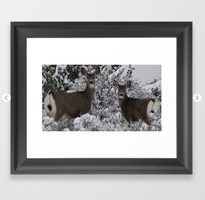 Mule Deer in the Oregon Snow Framed Art Print