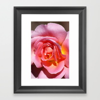 pink-yellow-rose-flower-framed-prints