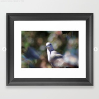 portrait of a dove Framed Art Print