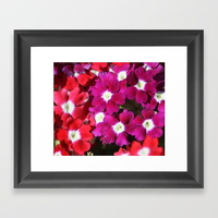 verbena-flowers-framed-prints